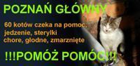 http://kocieadopcje.pxd.pl/gallery/pic349/v2010113022190352241100.jpg